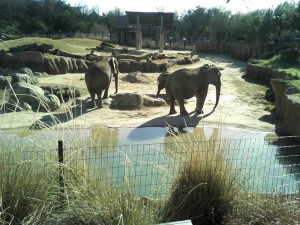 Elephants! My 'ancient' camera was in good form today! :D